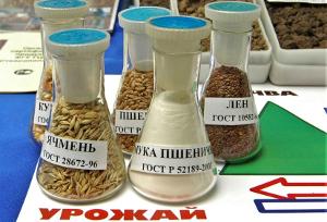 Сорго — на Алтай, пшеницу — в Туркмению