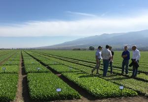KWS приобрела семенную компанию в Голландии