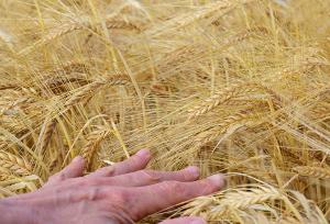 «Зерно — как новая нефть»