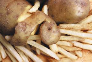 Картофель в тупике