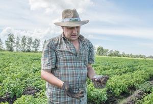 Единственный производитель элитного картофеля в Приамурье