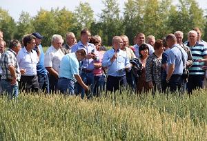 Правильная пшеница для правильных макарон