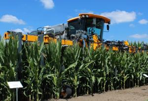 Низкорослая кукуруза лучше