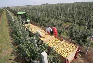 Семеноводство — основа роста урожайности