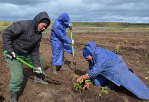 На Южном Урале станет больше интенсивных садов