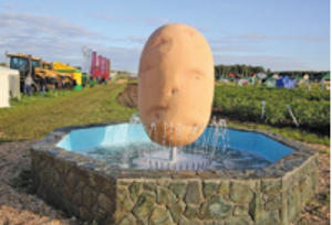 Картофель из «КРиММ»