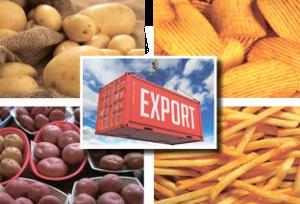 Организация продаж картофеля за рубеж