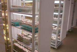 Биотехнология в помощь селекционерам