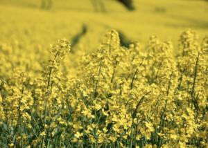 ГК «ЭФКО»: работаем с семенами на перспективу
