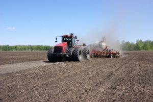 Агрохолдинг «Кургансемена» завершил посевные работы