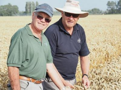 Пшеница KWS уже дает 173,98 центнера с гектара