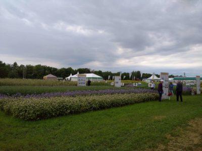 «День поля » в Татарстане