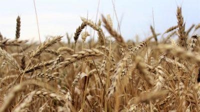 Состояние семеноводства в Украине