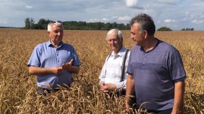 Новые сорта пшеницы