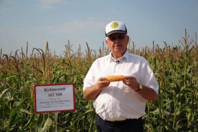 Самый скороспелый гибрид кукурузы