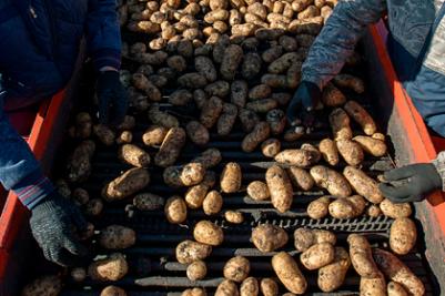 Исследование развития картофеля в Арктике