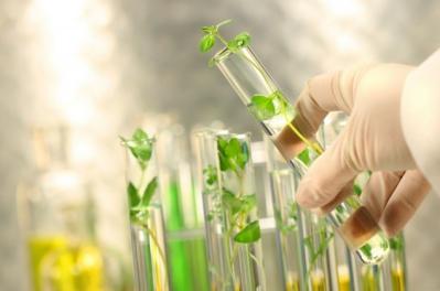 Селекция против генной инженерии