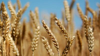 Борьба с заболеваниями сельхозкультур