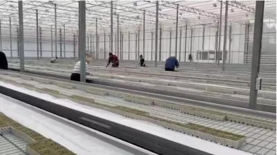 Современные теплицы для эко-семян
