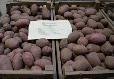 Международная проблема семеноводства картофеля
