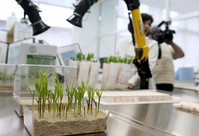 Новые сорта сельхозкультур