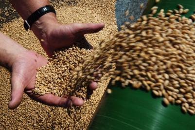 Субсидирование элитных семян