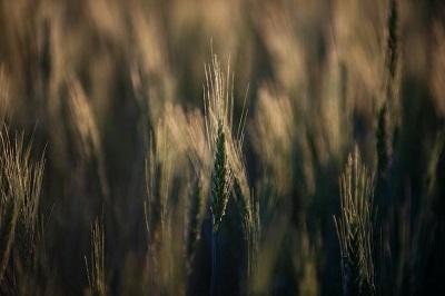 Генетика, селекция, семеноводство