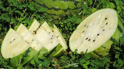 Выведен новый сорт астраханского арбуза