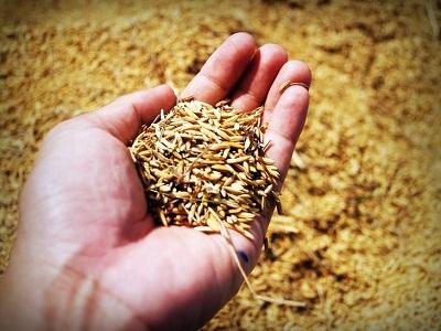 Семена под урожай 2021 года