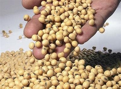 Ввоз сои и шрота с ГМО без регистрации