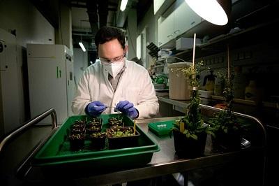 Иммунный ген растений