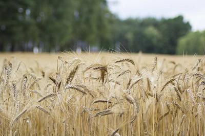 Сельское хозяйство XXI века