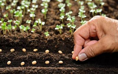 Обмен опытом по растениеводству