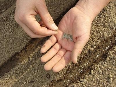 Продукция удмуртских семеноводов