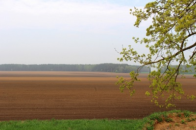 Объединение опыта в области селекции и семеноводства