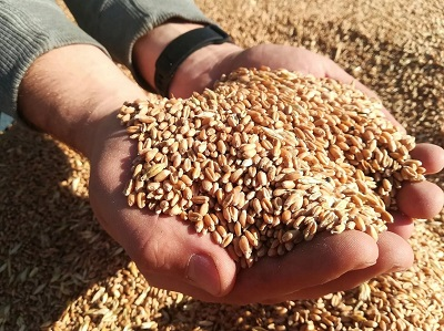 Содействие НССиС с поставкой семян