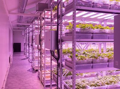 Новое решение для производства семенного картофеля