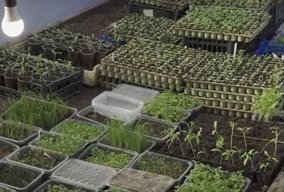 Новые сорта огурцов и томатов