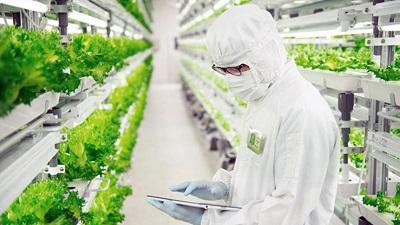 Научные работы над иммунитетом растений