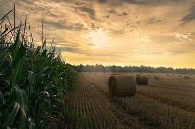 Госпрограмма развития отечественной селекции кукурузы