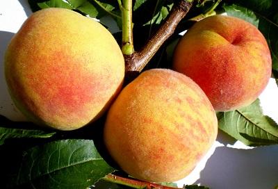 Новые сорта плодовых растений