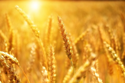 Онлайн семинар об аграрной науке и перспективах