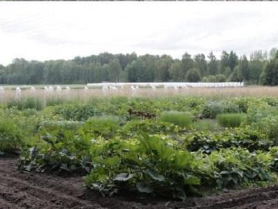 Исследования по генетическому редактированию сельхозкультур