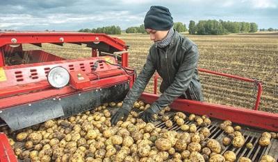 Перспективные агронаправления в Костромской области