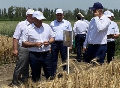 Развитие отечественного семеноводства в Кабардино-Балкарии