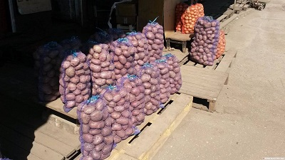 Выведен новый гибрид картофеля