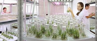Стимуляторы укоренения растений