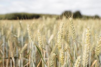 Система прослеживаемости зерна