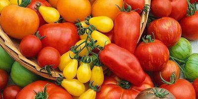 Улучшение урожайности томатов