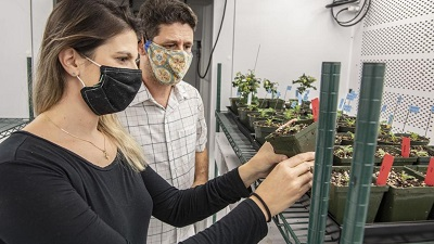 Томаты без пестицидов